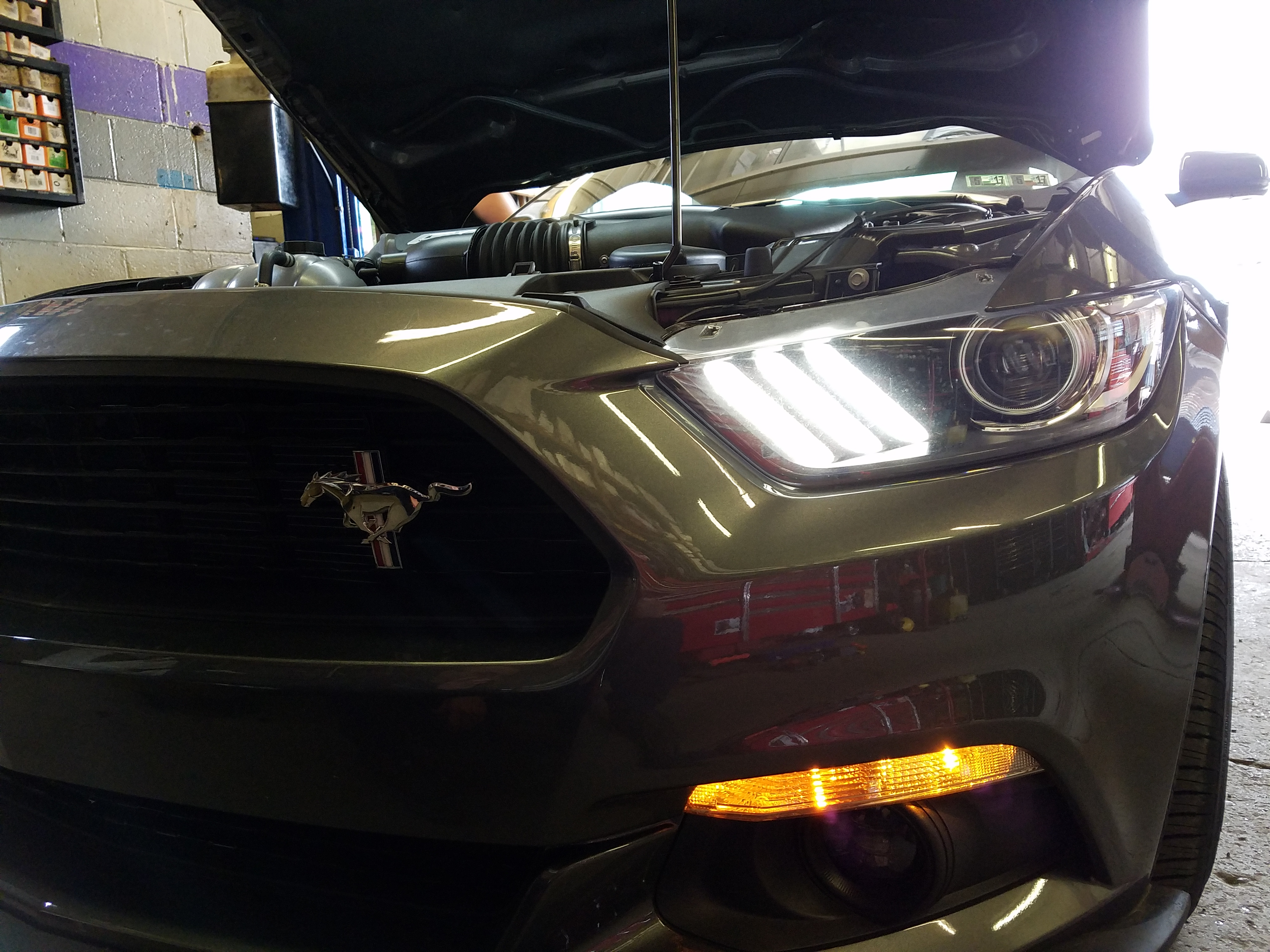 mustang ford gt california special vinces performance led light five oh